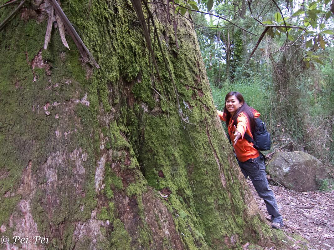 the tree hugger?