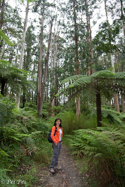 Amongst ferns and eucalyptus